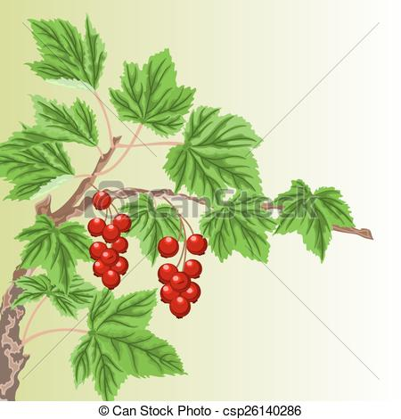 Vector of Twig garden currant bushes with red berries vector.
