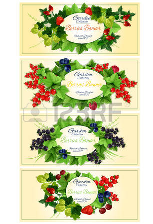 1,860 Red Currant Cliparts, Stock Vector And Royalty Free Red.