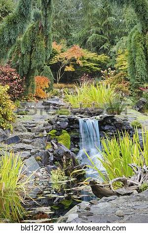 Stock Image of Autumn leaves on bushes around waterfall feature in.