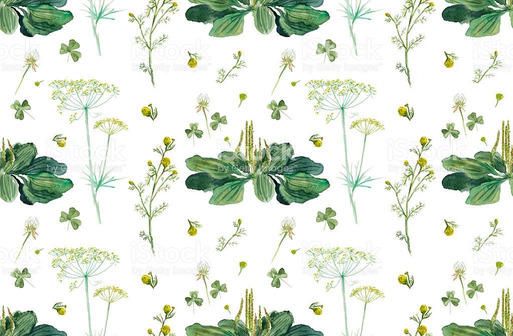 Fennel Wild Chamomile Plantain Seamless Herb stock vector art.