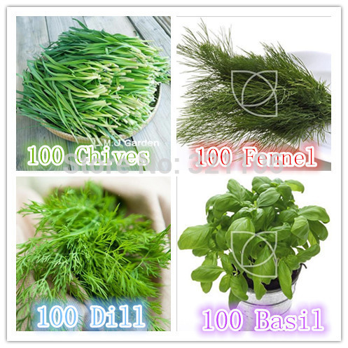 Online Buy Wholesale herbs fennel from China herbs fennel.