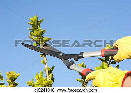 Stock Photography of Garden work pruning tree sky background.