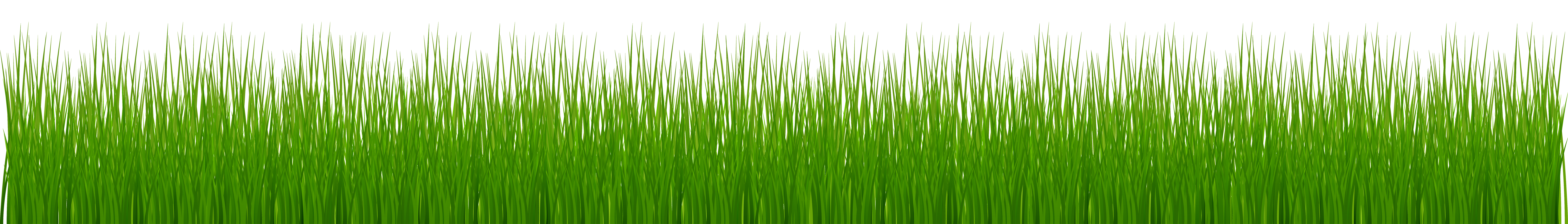 8070 Grass free clipart.