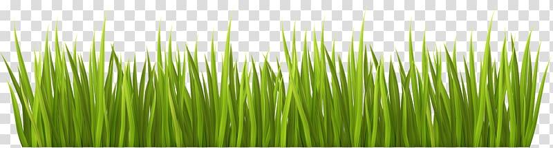 Lawn Garden , grass transparent background PNG clipart.