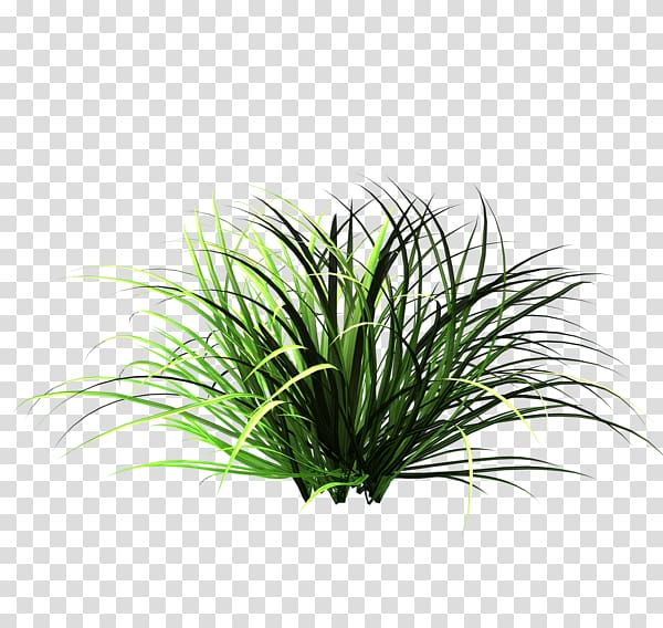 Green grass, Patch of grass Lawn Garden , Nature Tall Grass.