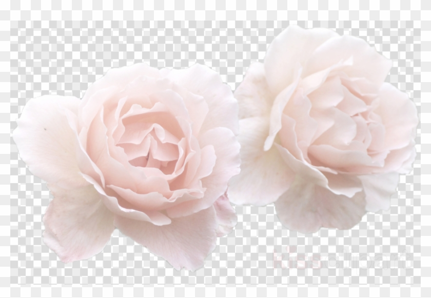 White Rose Flower Crown Transparent Clipart Garden, HD Png.