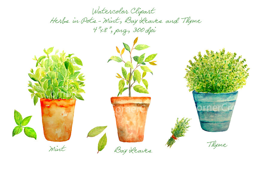 Herb clipart.