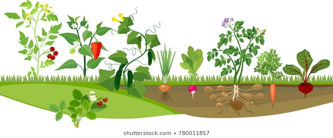 Healthy Backyard Vegetable Garden Stock Illustrations Images Unusual.