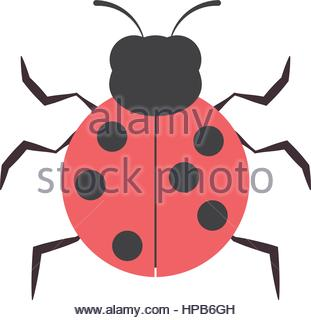 Leaf Beetle And Ant Stock Photo, Royalty Free Image: 131152823.