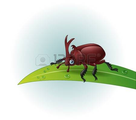 1,826 Leaf Beetle Stock Vector Illustration And Royalty Free Leaf.