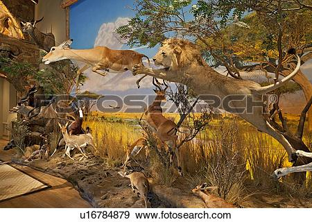 Stock Photograph of Lion attacking at deer in museum u16784879.