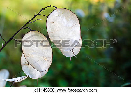 Pictures of Lunaria Mill k11149838.