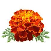 Marigold Clip Art.