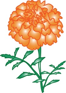 Marigold Clipart Image.