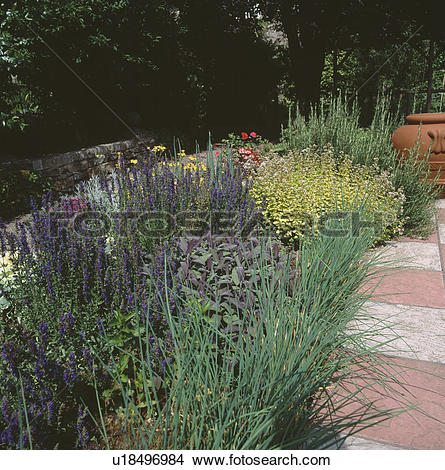 Stock Photo of Chives and sage with marjoram and other herbs in.