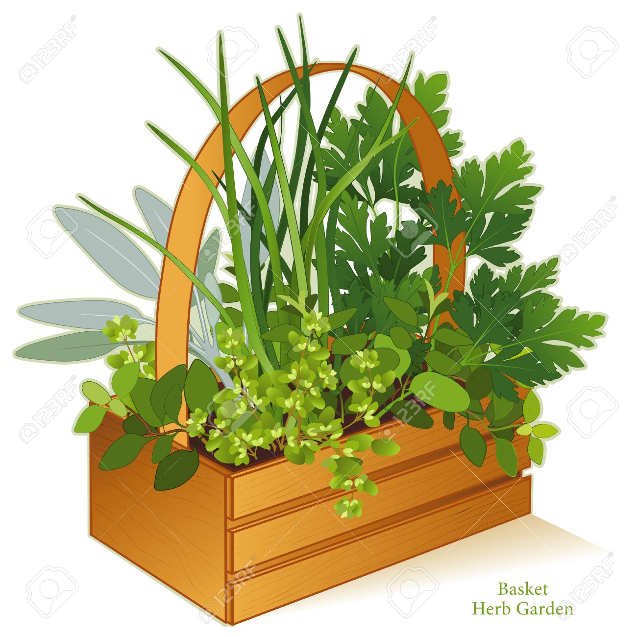 259 Marjoram Herb Stock Illustrations, Cliparts And Royalty Free.