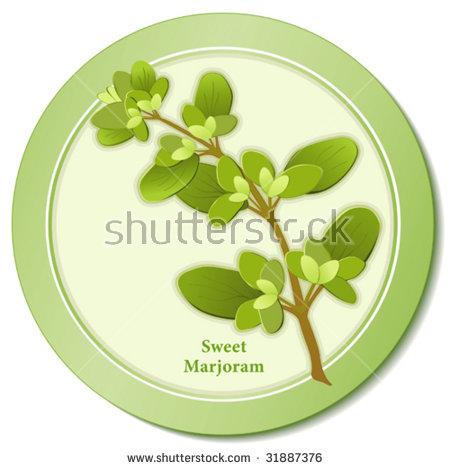 Sweet Marjoram. Tender Garden Herb, To Cook Meats, Poultry, Soups.