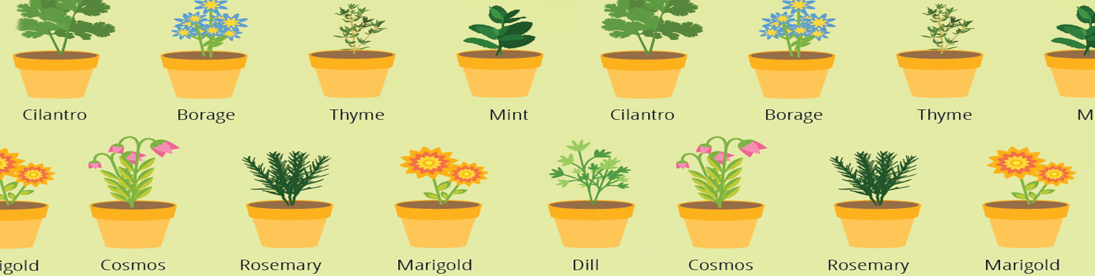 5 Methods To Get Rid Of Garden Pests Without Harmful Chemicals.