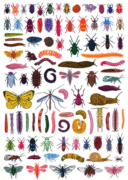 1000+ images about Pests Be Gone on Pinterest.