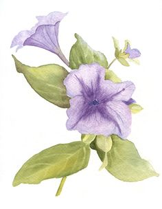Purple Petuniasgarden art watercolor..