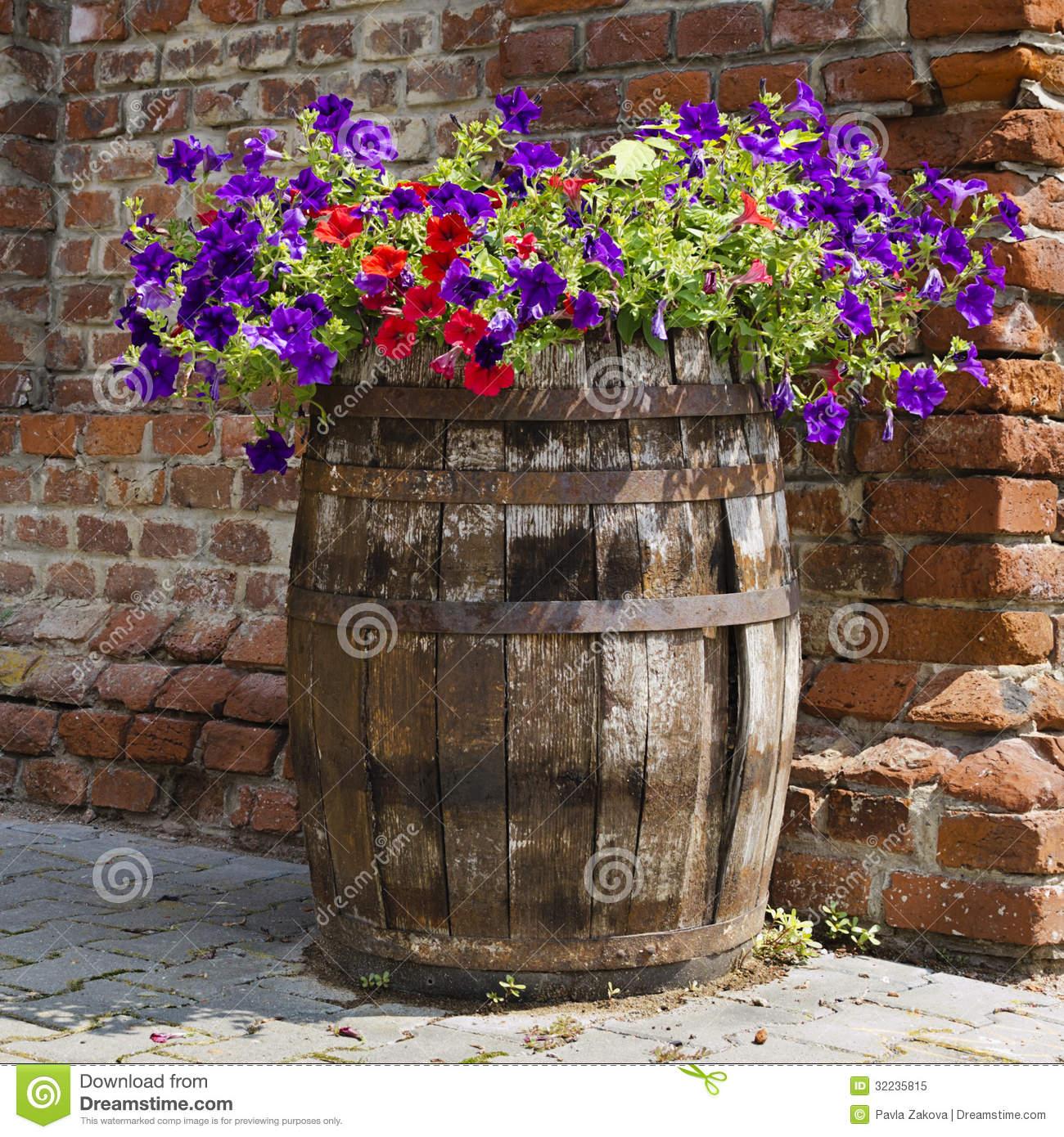 Petunia Barrel Garden Royalty Free Stock Photo.