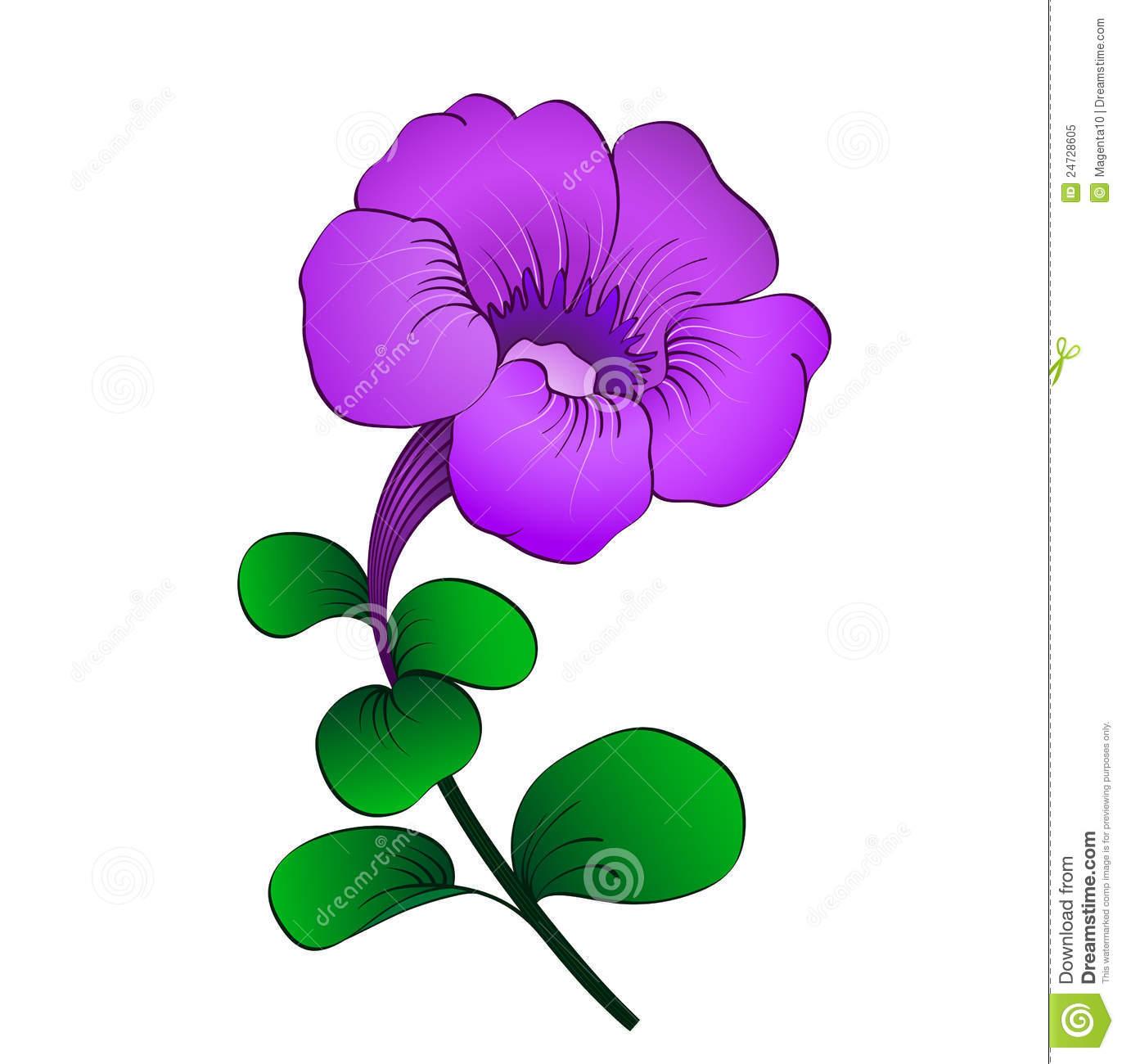 Petunia Stock Illustrations.