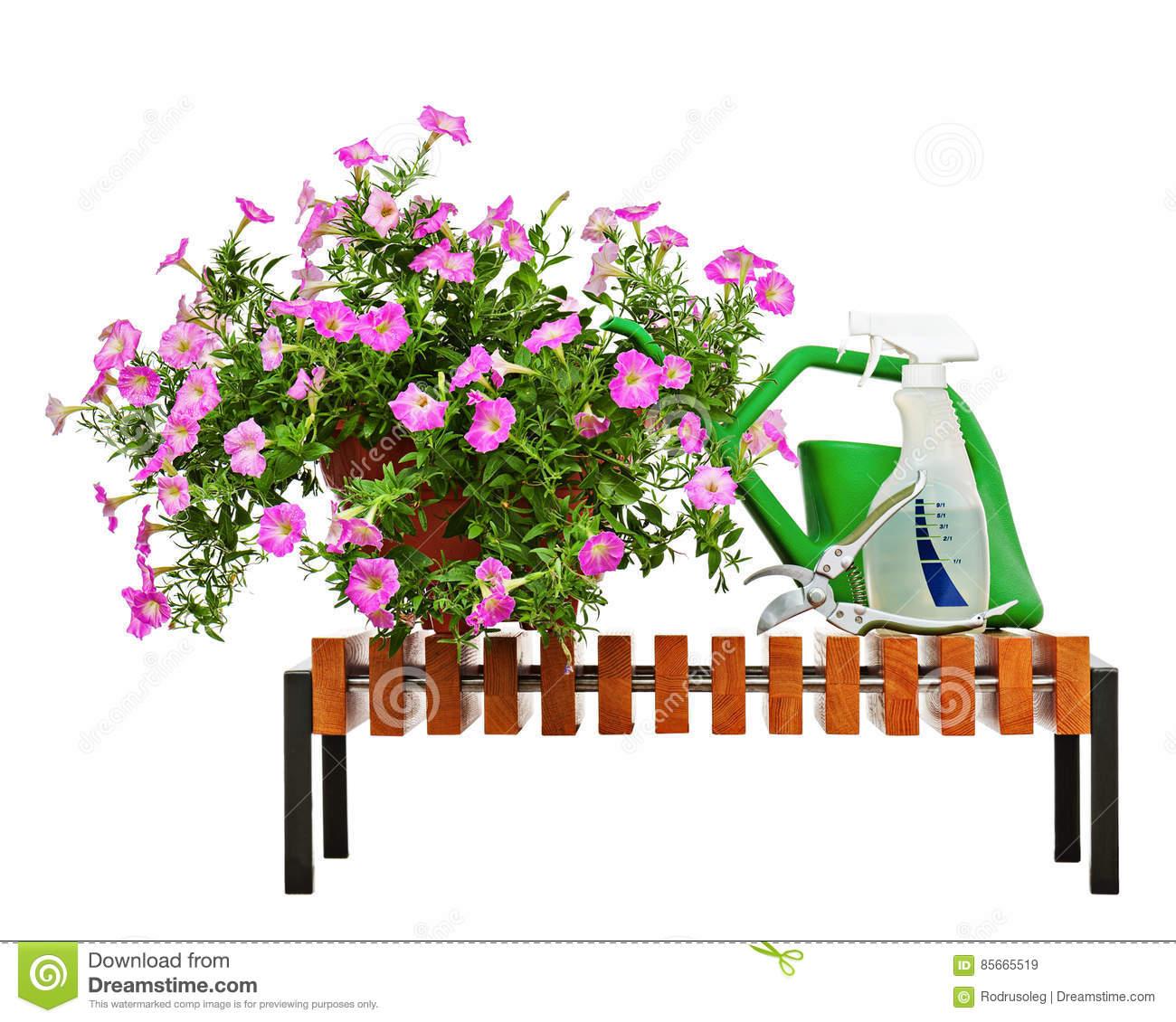Pink Petunia Flowers In Flowerpot With Garden Accessories. Stock.