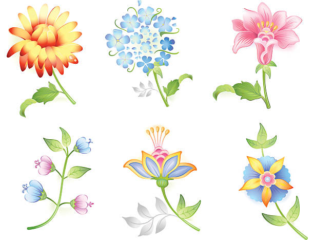 Garden Phlox Clip Art, Vector Images & Illustrations.