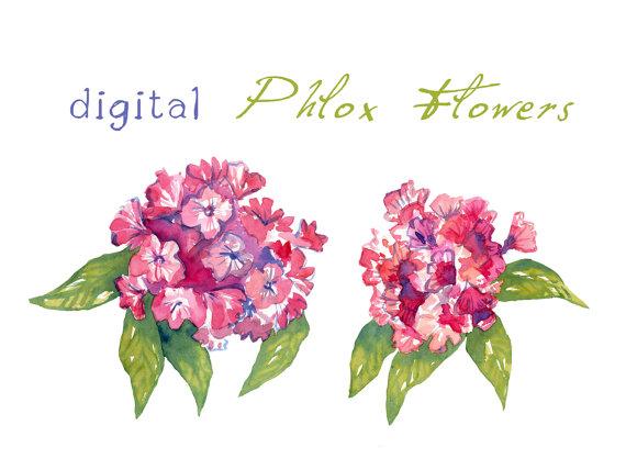 Digital Clipart Watercolor Phlox Flowers Flower by SwiejkoForPrint.