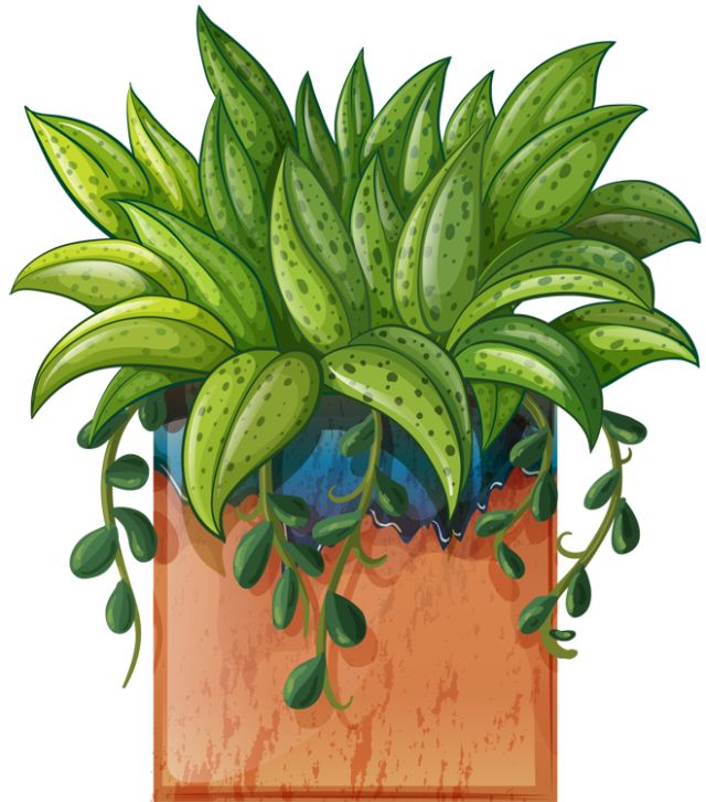 Clip Art Of Beautiful Plants For The Spring Garden
