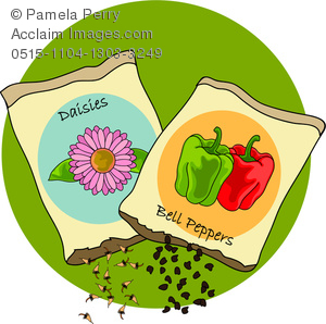 Clip Art Image of Bell Pepper and Daisy Seed Packets.