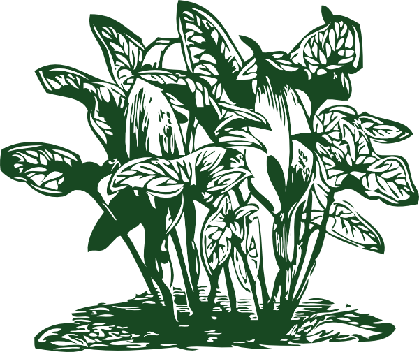 Tropical Plants Clip Art at Clker.com.