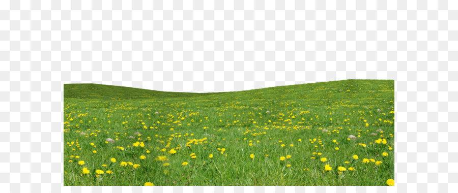 Flower Field png download.