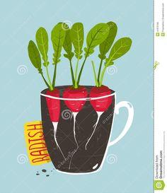 Radishes #vegetarian #food #illustrations.