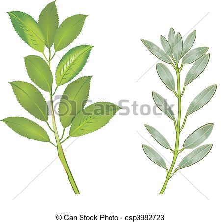 Sage Illustration Garden sage cli...