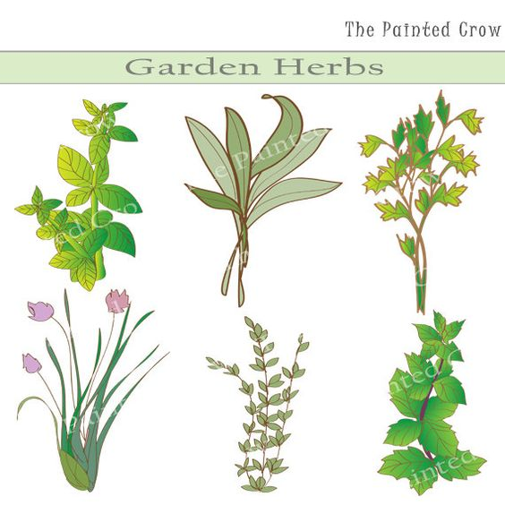 Gardens, Shops and Herbs on Pinterest.