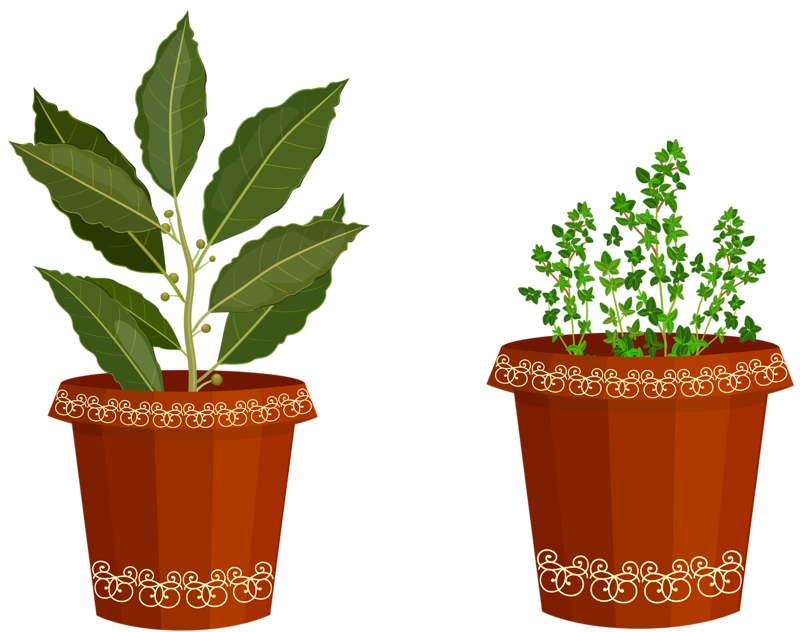 spices plant 3.