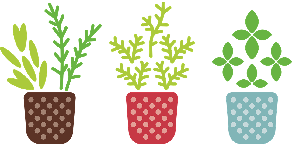 Free vector graphic: Herb, Pot, Plant, Grow, Garden.