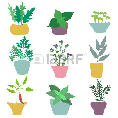 2,783 Garden Spice Cliparts, Stock Vector And Royalty Free Garden.