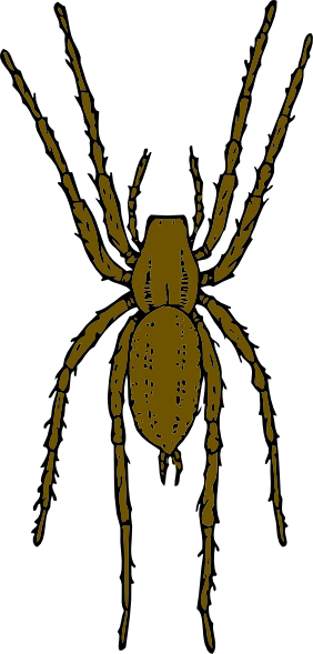 Brown Spider Clip Art at Clker.com.