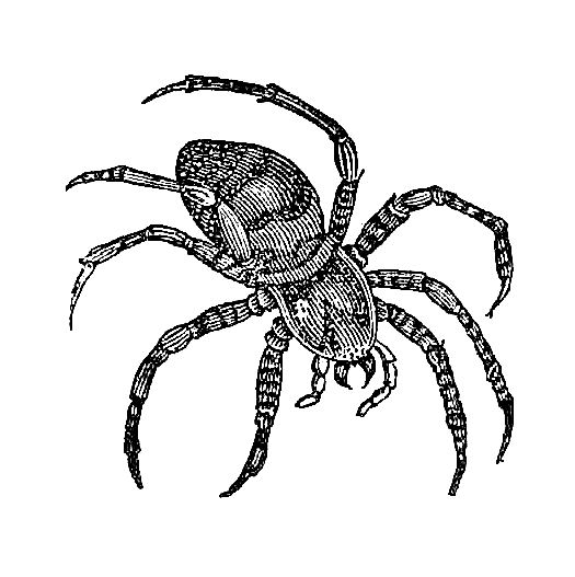 Spider Illustrations.