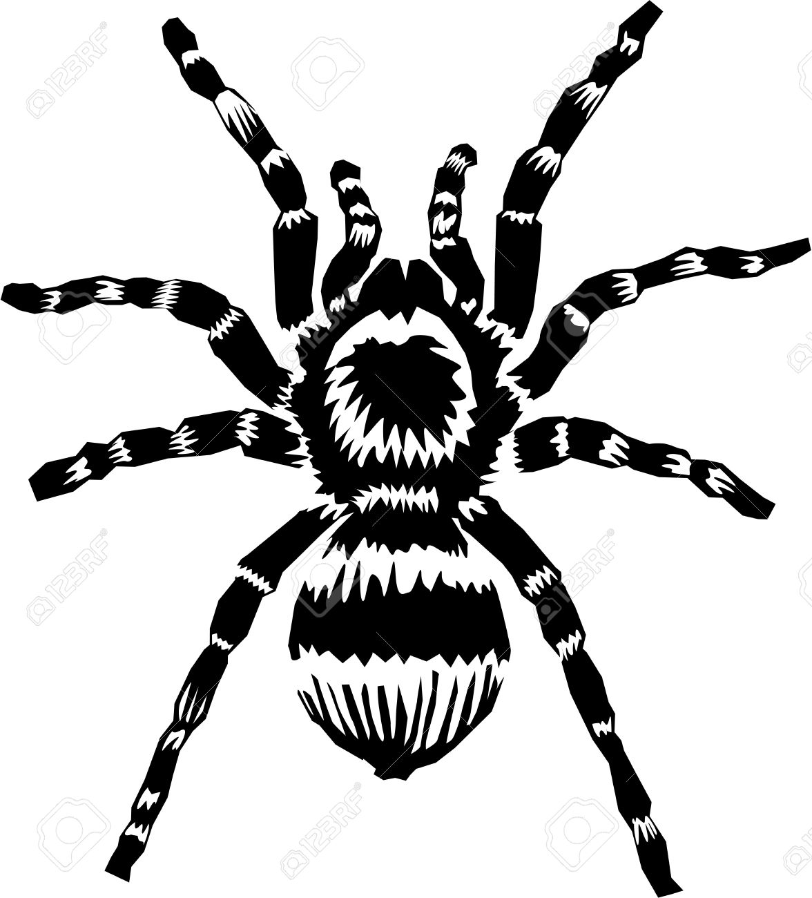 14,850 Spider Web Stock Vector Illustration And Royalty Free.
