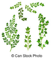 Thyme Stock Illustrations. 597 Thyme clip art images and royalty.