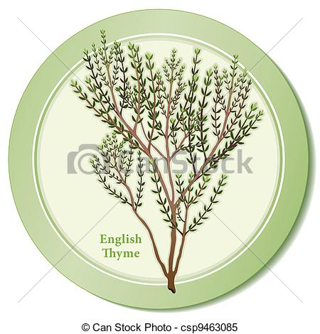 Clipart Vector of English Thyme Herb Icon.