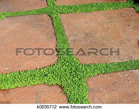 Stock Photo of Garden Walk k0035712.