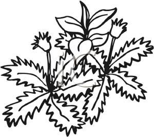 Clipart garden weed.