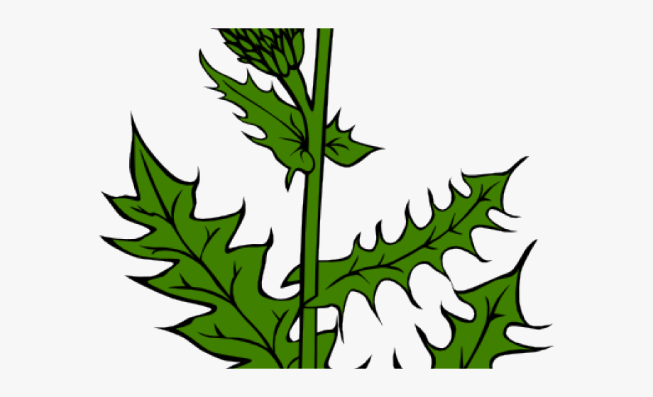Weed Clipart Dandy Lion, Cliparts & Cartoons.