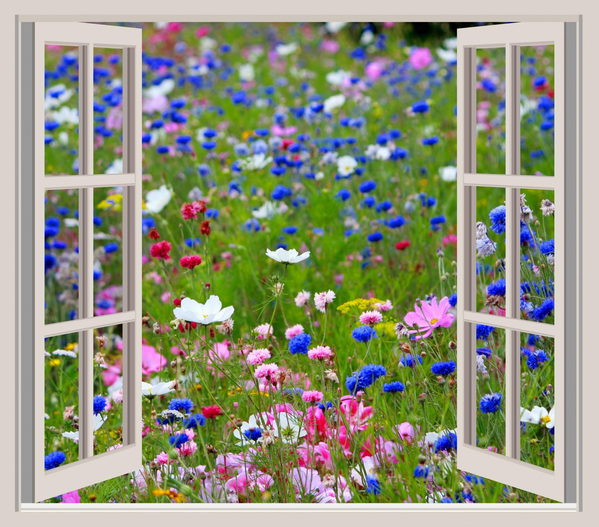 Garden Window Clipart Clipground