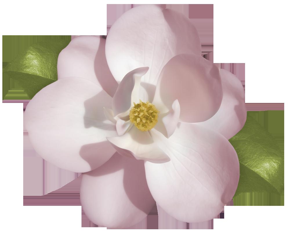 Gardenias Care.