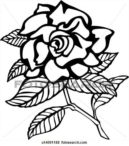 Gardenia Clipart.